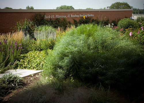 Jack H Marston Healing Garden