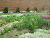 Jack Marston Healing Garden